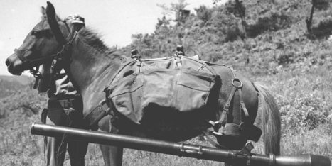 Marine War Horse Honored For Battlefield Bravery In Korean War | World at War | Scoop.it