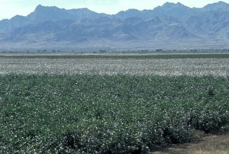 Genetic Basis Of Pest Resistance To Biotech Cotton Discovered | redOrbit | CALS in the News | Scoop.it