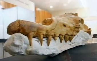 Peru discovers 40 million year old whale fossils in desert | Aux origines | Scoop.it