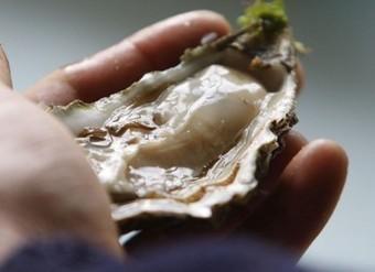 L'huître bientôt pasteurisée ? | Toute l'actu culinaire | Scoop.it