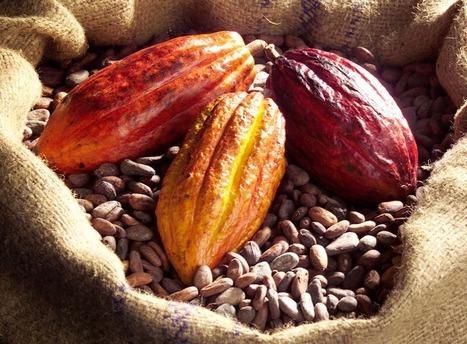 Le thé moins rémunérateur pour l'Afrique de l'Est (25/10/2013)   NEWS from the TEA WORLD - NELLES DU MONDE DU THE   Scoop.it