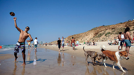 Fun & FREE Things to do With Kids at Tel Aviv Beaches | blog | 7 Attractions You may Check in Tel Aviv | Scoop.it