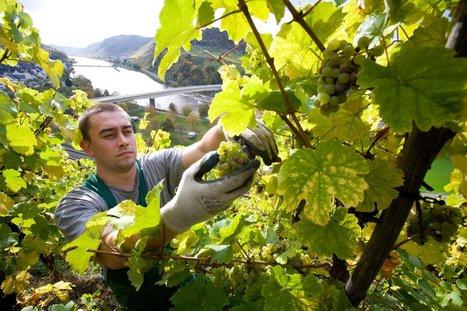 Germany's Wine Revolution Is Just Getting Started   Vitabella Wine Daily Gossip   Scoop.it