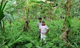 Panama project encourages farmers to create sustainable tropical ecosystems | Biodiversité | Scoop.it