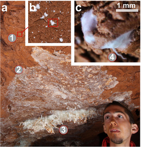 Microbial mediation of complex subterranean mineral structures | Mineralogy, Geochemistry, Mineral Surfaces & Nanogeoscience | Scoop.it