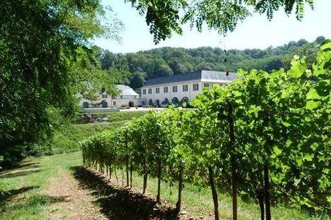 En Béarn, la vigne des mousquetaires table sur le numérique | Agriculture Aquitaine | Scoop.it