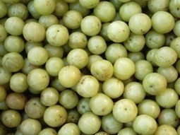 The Amla Berry: A Small Fruit With Big Nutrition   Alive Juices   Scoop.it