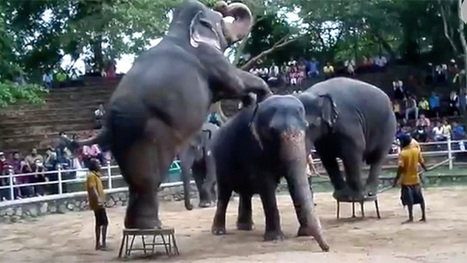 World's peak zoo body accused of inaction over animal abuse – video | GarryRogers NatCon News | Scoop.it