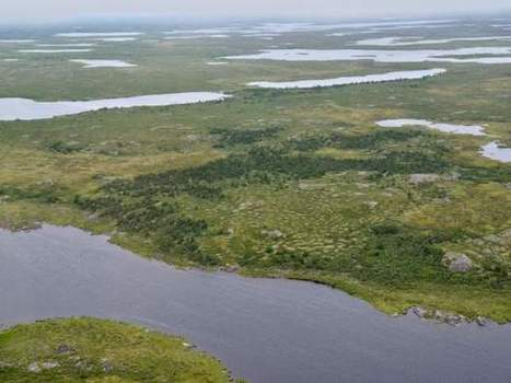 Canada's tundra is turning green and its Boreal forest brown, NASA study finds | Amazing Science | Scoop.it