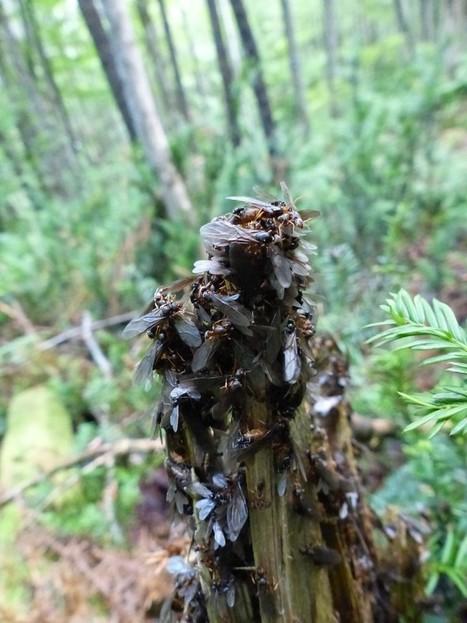 Global : Hyménoptères du Québec - Canada - Hyménoptère - Guêpe - Abeille - Fourmi - Guêpes - Abeilles - Fourmis - Wasp - Bee - Ants - Wasps - Bees - Ant | Fauna Free Pics - Public Domain - Photos gratuites d'animaux | Scoop.it