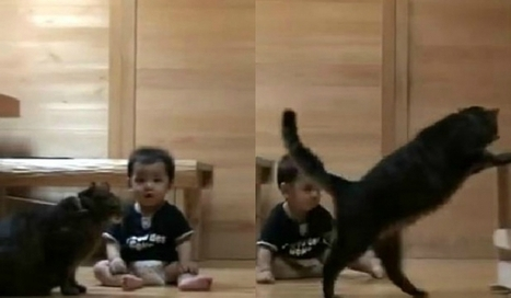 Un chat apprend à un bébé à faire ses premiers pas | CaniCatNews-actualité | Scoop.it