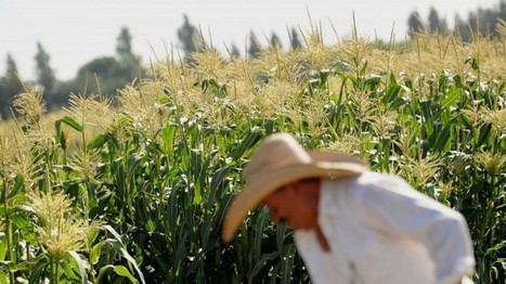 What you need to know about GMOs | Popular Science | Scoop.it