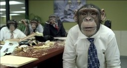 What Monkeys Can Teach Us About Employee Motivation | Human to Human | Scoop.it
