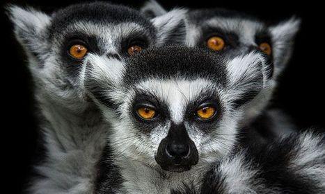 La mystérieuse beauté des animaux capturée par les saisissants portraits de Wolf Ademeit | Animaux | Scoop.it
