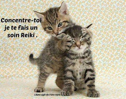 le reiki…vu par nos amis les chats :-) | prendre soin de soi ... | Insular Life brings you to meditation! | Scoop.it