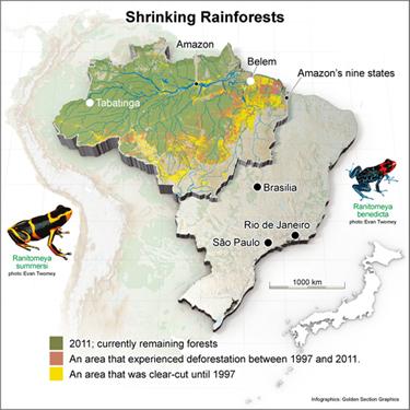 Soybean and livestock farming behind deforestation - Asahi Shimbun | Biomes | Scoop.it