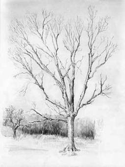 Disegnare alberi a matita (by Diane Wright) | Circolo d'Arti | Scoop.it