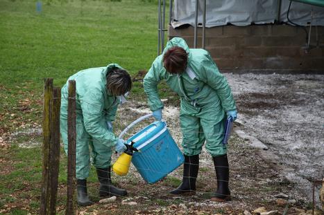 Dordogne : Un nouveau cas de grippe aviaire à Ladornac | Agriculture en Dordogne | Scoop.it
