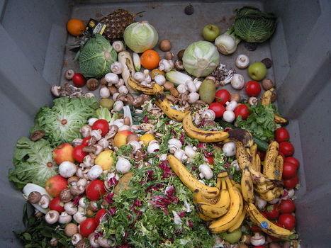 Ils font recette de la lutte contre le gaspillage alimentaire | Marchés forains : au coeur de la solidarité, de l'écologie et du dynamisme économique et culturel | Scoop.it
