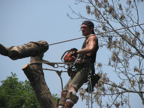 Moore Tree Service LLC: removal, trimming & stump grinding in Canton GA | The Best Thing To Do I Think | Scoop.it