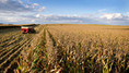 Farmers Plan Biggest U.S. Crop Boost Since 1984, Led by Corn: Commodities | Local Economy in Action | Scoop.it
