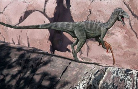 Australia had globe-trotting dinosaurs | Internet Marketing Brain Candy | Scoop.it