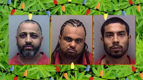 Lehigh Acres, Florida 'elves' caught packaging 70 pounds of pot as Christmas presents | The Billy Pulpit | Scoop.it