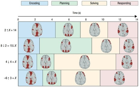 Neuroimaging data reveal four distinct stages when solving math problems | Amazing Science | Scoop.it