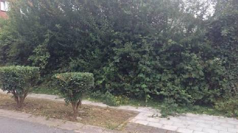 A Charleroi et ailleurs, les mauvaises herbes sont aussi l'affaire des citoyens | Plusieurs idées pour la gestion d'une ville comme Namur | Scoop.it