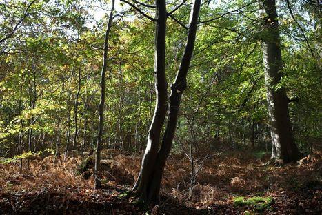 Environnement : ils en veulent à nos forêts - Le Parisien | Le Fil @gricole | Scoop.it