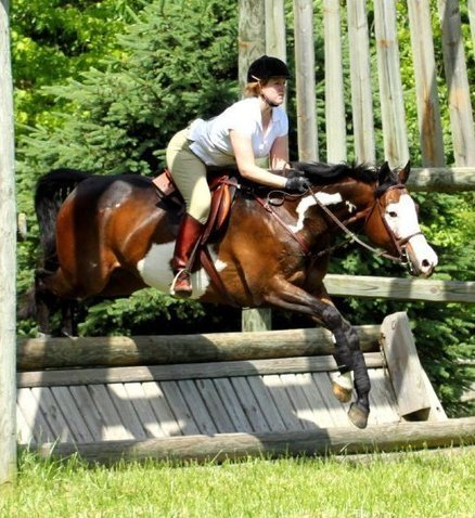 Into the Wild Blue Yonder | From the Equine Blogosphere | Scoop.it