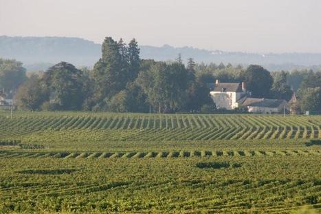 Chateau de Miniere is now labelled Vignobles & Decouvertes Chinon-Bourgueil-Azay   Tourisme viticole en France   Scoop.it