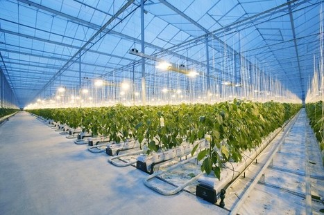 The Netherlands Innovation Campus Ecosystem - NFIA | Electronics Manufacturing | Scoop.it