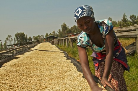 Can Silicon Valley's Big Bet On Agriculture Help Small-Scale Farmers In Developing Countries? | Coffee News | Scoop.it