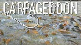 Carpageddon: Australia plans to kill carp with herpes - BBC News | Aquaculture Directory | Scoop.it