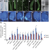 A receptor heteromer mediates the male perception of female attractants in plants | Emerging Research in Plant Cell Biology | Scoop.it