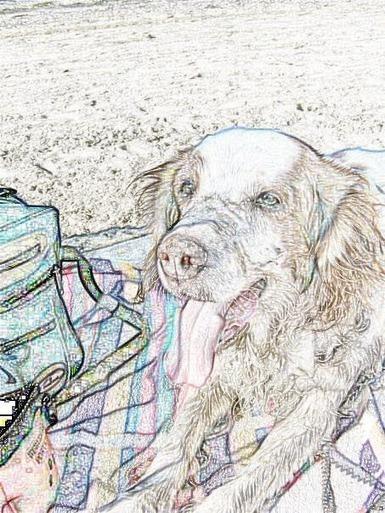 perros de casa: Campeón, un galgo con suerte... | Pablo Galgo | Scoop.it