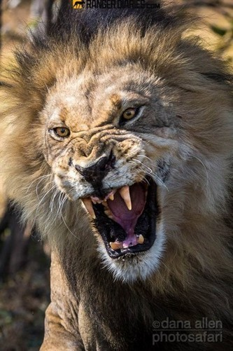 Top 25 Photographs from the Wilderness #14 - National Geographic | Kruger & African Wildlife | Scoop.it