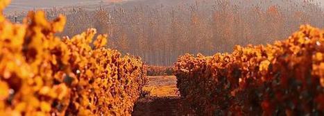 El paisaje del vino de Rioja Alavesa, candidato a Patrimonio de la Humanidad | Paisaje y turismo | Scoop.it