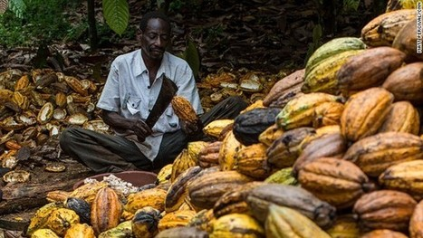From bean to bar: Why chocolate will never taste the same again | Geography in the news | Scoop.it