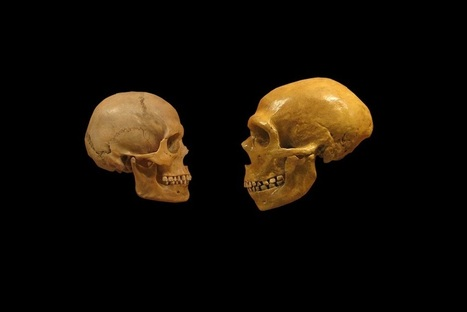 The genomic landscape of Neanderthal ancestry in present-day humans | Heritage Daily | Kiosque du monde : A la une | Scoop.it