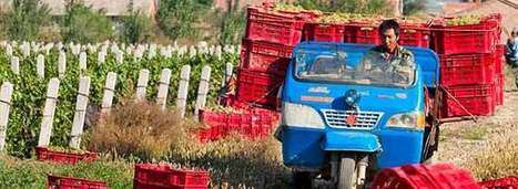 1 in 5 Chinese Wines Close to European Standard | Wine News & Features | Wine & Olive Oil Strategy & Sustainability | Scoop.it