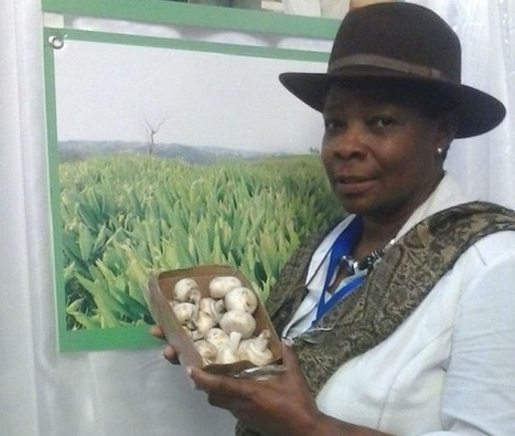 Great Britain: Manchester women find empowerment through mushroom production | Mushroom cultivation in The Third World | Scoop.it