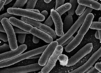 Biopilas: generando energía a través de bacterias - | #DesarrolloSostenible | Scoop.it