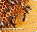 Study: EPA-approved GMO insecticide responsible for killing bees | Longevity science | Scoop.it
