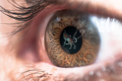 Bristol researchers gain new insight into a human visual supersense | Amazing Science | Scoop.it