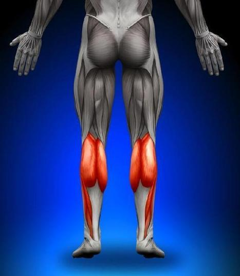 The Top 5 Ways Fascia Matters to Athletes | Tri Junk | Scoop.it