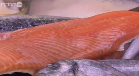 La Norvège reconnaît que son saumon d'élevage peut être dangereux | Articles divers | Scoop.it