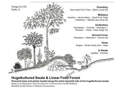 Schema di funzionamento degli Swales, i fossi livellari usati in permacultura per irrigare a costo zero con l'acqua piovana