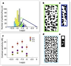 Information and Perception of Meaningful Patterns | Social Foraging | Scoop.it